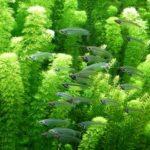 Aquarium kaufen: Kaufberatung für Aquaristik