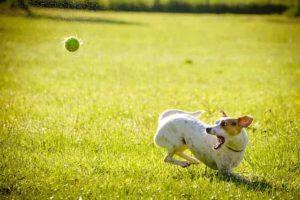 Hundeschule - Hund mit Ball